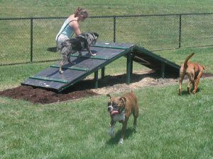 A dog owner and 3 dogs playing on a ramp at the Dog Park
